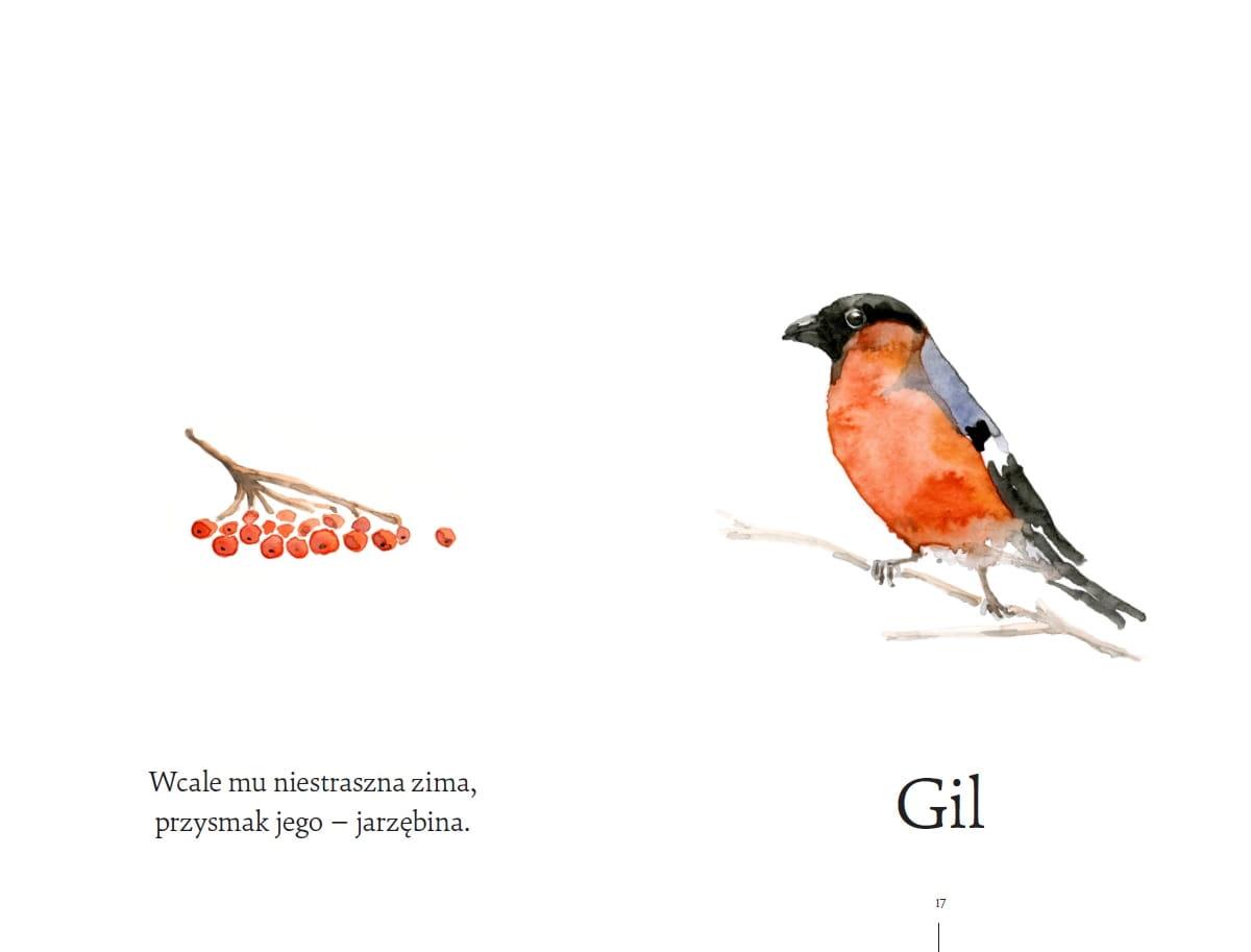 Co Za Ptak Robi Tak